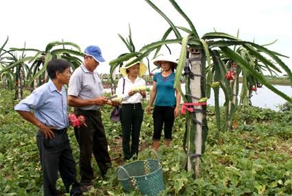 Кханьтхиен – первая община провинции Ниньбинь, завершившая строительство новой деревни - ảnh 2