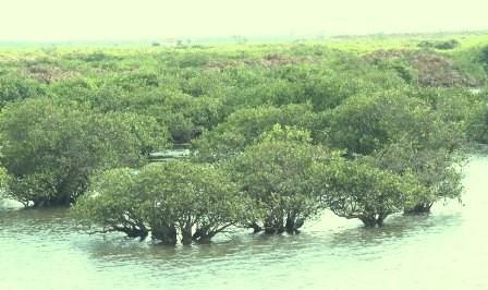 Реструктуризация экономики для борьбы с изменением климата в приморских провинциях Вьетнама - ảnh 1