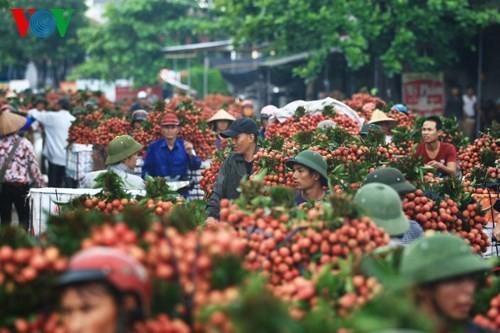 Экспорт личи и шанс на экспорт сельхозпродукции Вьетнама - ảnh 1
