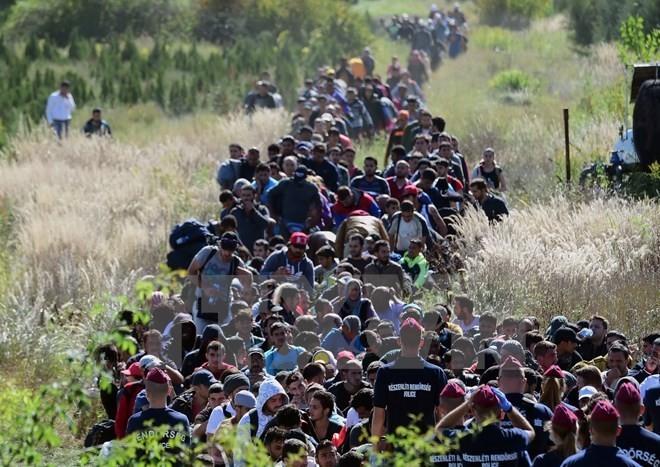 Возможности и вызовы, связанные с волной миграции в Европу - ảnh 2