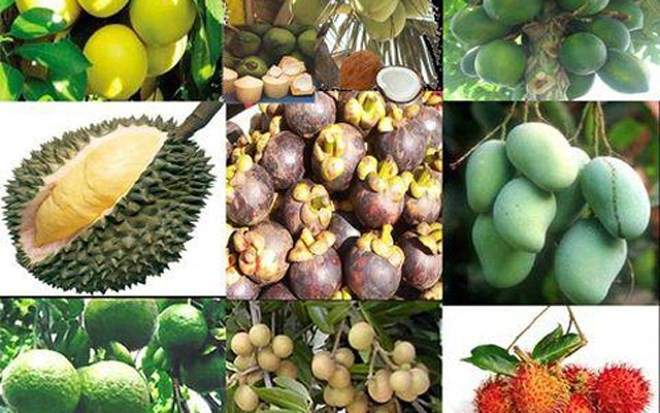Популярные фрукты на юго-западе Вьетнама - ảnh 1