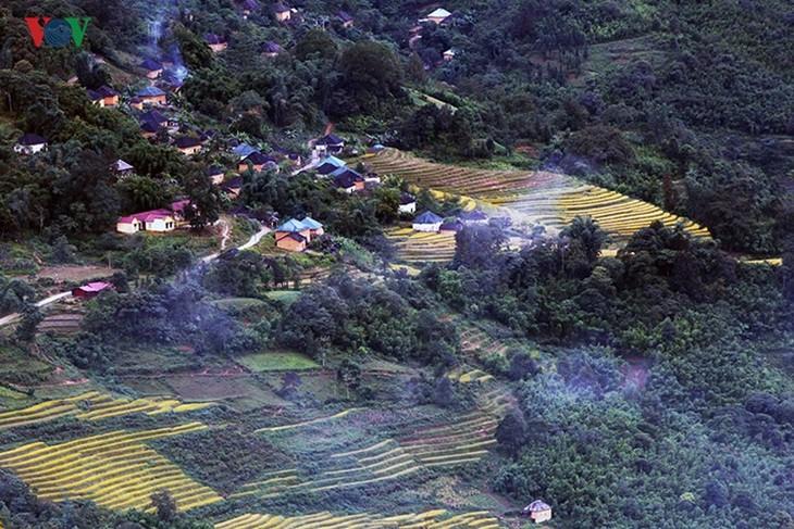 Сбор урожая риса в пограничном районе Ити - ảnh 3