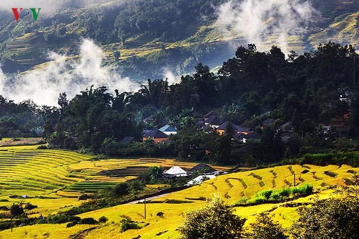 Сбор урожая риса в пограничном районе Ити - ảnh 4