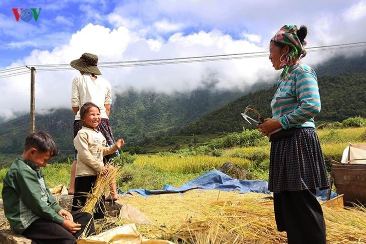 Сбор урожая риса в пограничном районе Ити - ảnh 8