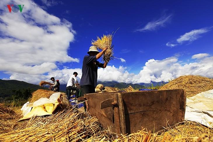 Сбор урожая риса в пограничном районе Ити - ảnh 10