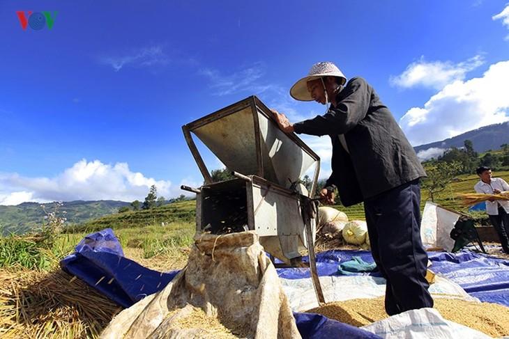 Сбор урожая риса в пограничном районе Ити - ảnh 11