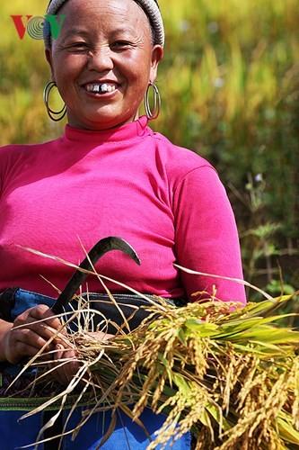 Сбор урожая риса в пограничном районе Ити - ảnh 12