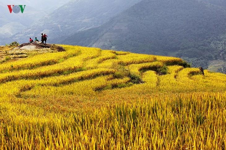 Сбор урожая риса в пограничном районе Ити - ảnh 14