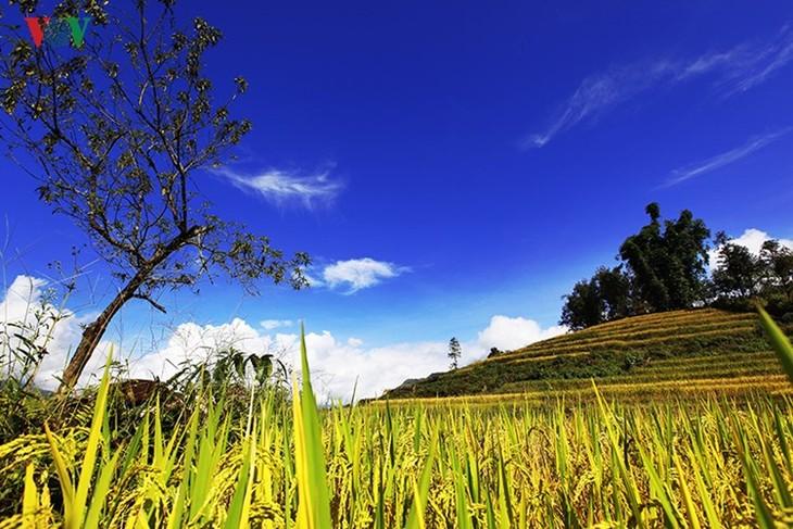 Сбор урожая риса в пограничном районе Ити - ảnh 15