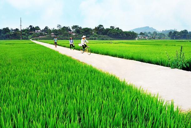 Строительство новой деревни в общине Зуишон провинции Куангнам - ảnh 2
