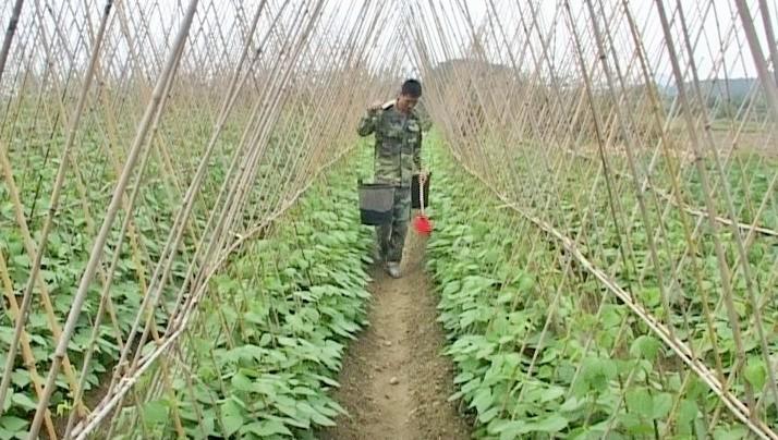 Провинция Куангнинь в основном завершила строительство новой деревни - ảnh 2