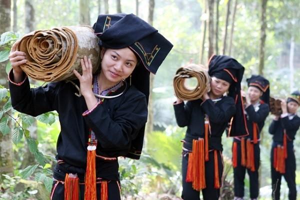 Зажиточная жизнь в зонах по выращиванию корицы в провинции Йенбай - ảnh 2