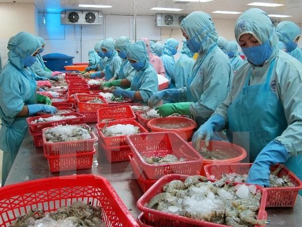 Рыбное хозяйство Вьетнама стремится к увеличению экспорта креветок - ảnh 1