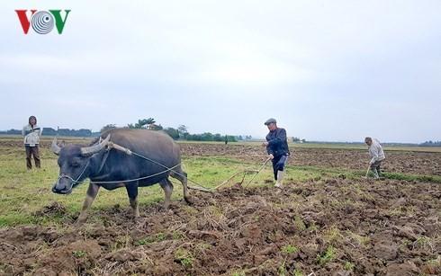По всему Вьетнаму с новым подъемом начинается производственная деятельность - ảnh 2