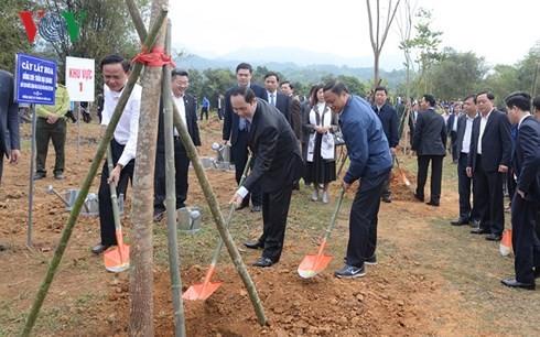 Праздник посадки деревьев в знак выражения признательности Президенту Хо Ши Мину - ảnh 1