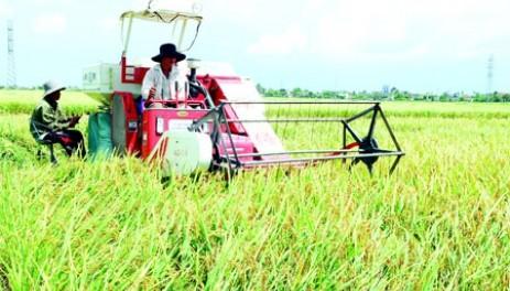Провинция Тхайбинь развивает сельское хозяйство - ảnh 1