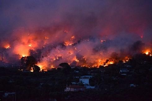 Чан Дай Куанг выразил соболезнования президенту Греции в связи с пожарами - ảnh 1
