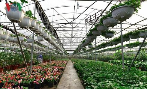 Молодые миллиардеры в новой цветочной деревне Суанкуан - ảnh 1
