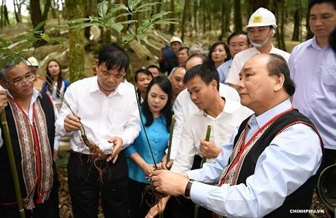 Нгуен Суан Фук: женьшень «Нгоклинь» является национальным достоянием Вьетнама - ảnh 1