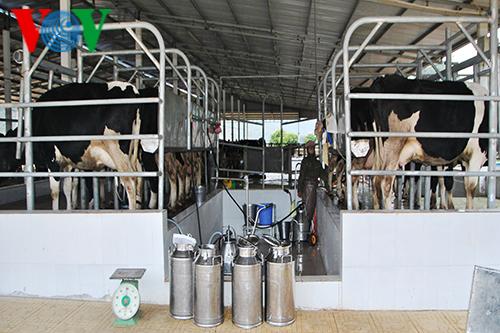 Развитие высокотехнологичного сельского хозяйства в провинции Шонла - ảnh 1