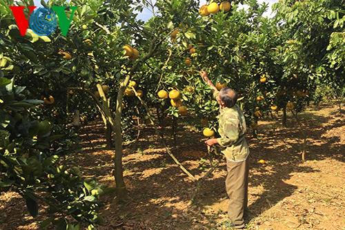 Развитие высокотехнологичного сельского хозяйства в провинции Шонла - ảnh 2