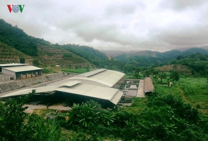 Модель по производству экологически чистой сельхозпродукции в Йенбае - ảnh 1