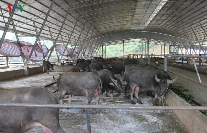 Модель по производству экологически чистой сельхозпродукции в Йенбае - ảnh 2