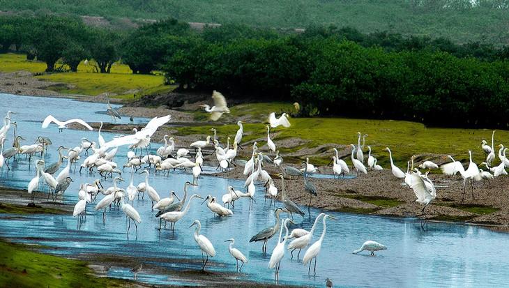Parc national de Xuân Thuy : là où l'oiseau se pose - ảnh 1