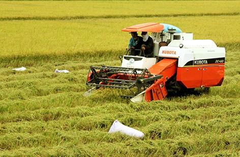 Développer l'agriculture high-tech - ảnh 1
