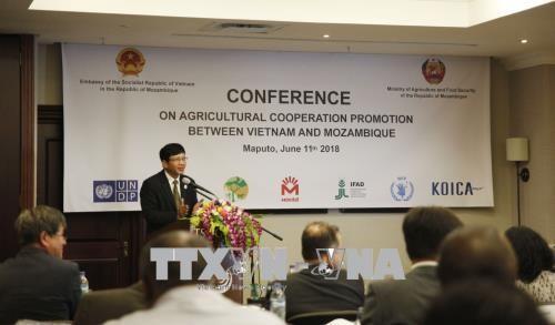 Le Mozambique apprécie l'efficacité de sa coopération avec le Vietnam dans l'agriculture - ảnh 1