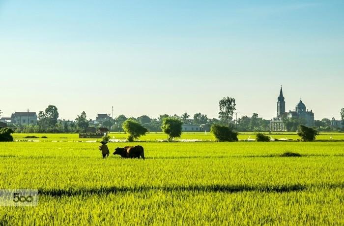 Thai Binh mise sur le remembrement pour développer l'agriculture - ảnh 1