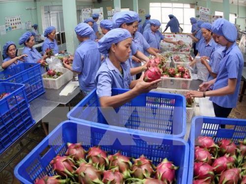 Pour que les produits agricoles vietnamiens trouvent leur place sur le marché sud-coréen - ảnh 1