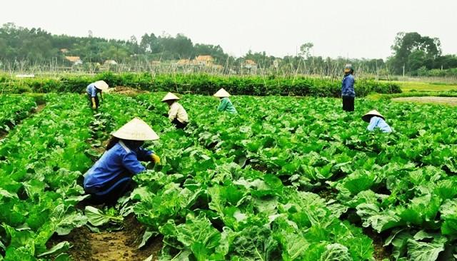 Les produits du terroir favorisent le développement économique local - ảnh 1