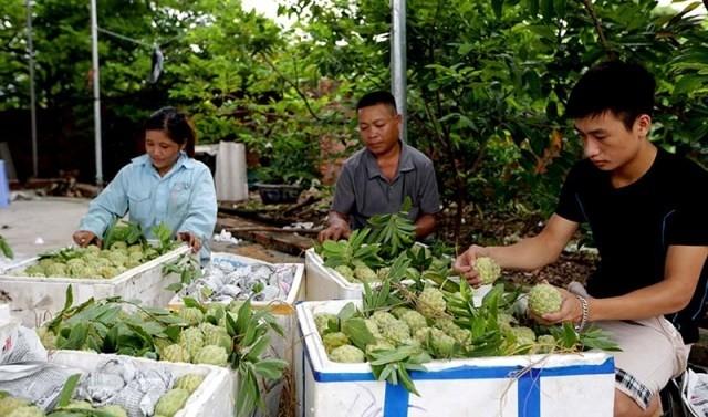 Les produits du terroir favorisent le développement économique local - ảnh 2