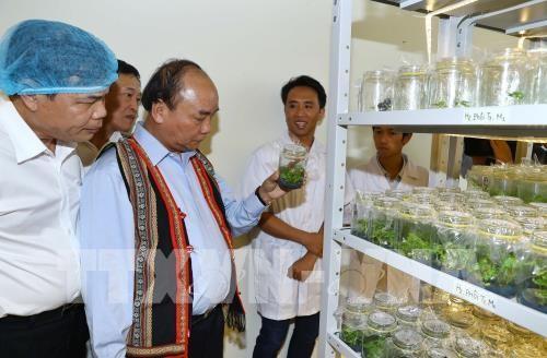 Nguyên Xuân Phuc: le ginseng de Ngoc Linh est un trésor du Vietnam - ảnh 1