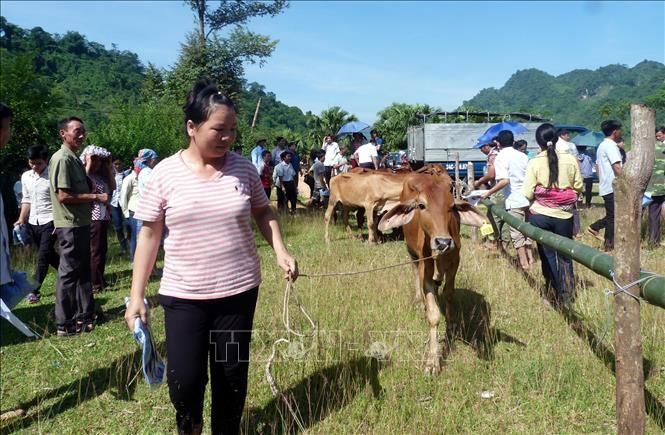 Réduction de la pauvreté multidimensionnelle au Vietnam: des écarts importants - ảnh 1