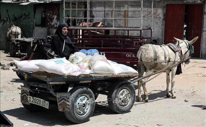 Le manque de fonds menace l'aide alimentaire pour les Palestiniens - ảnh 1