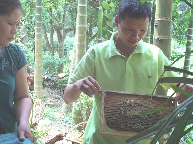 Người nuôi ong dưới tán rừng - ảnh 8