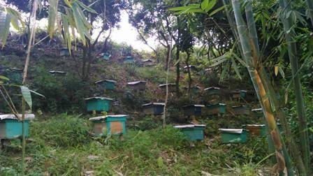 Người nuôi ong dưới tán rừng - ảnh 4