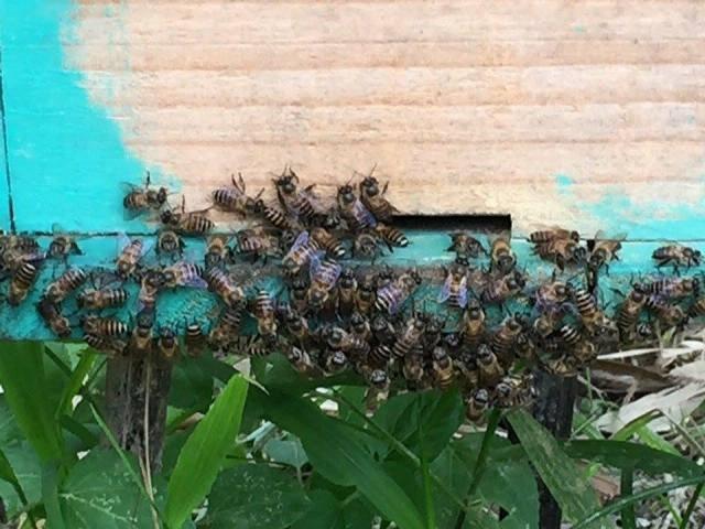 Người nuôi ong dưới tán rừng - ảnh 9