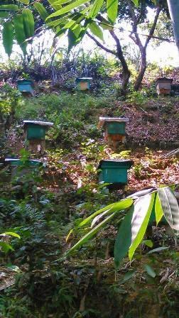 Người nuôi ong dưới tán rừng - ảnh 3