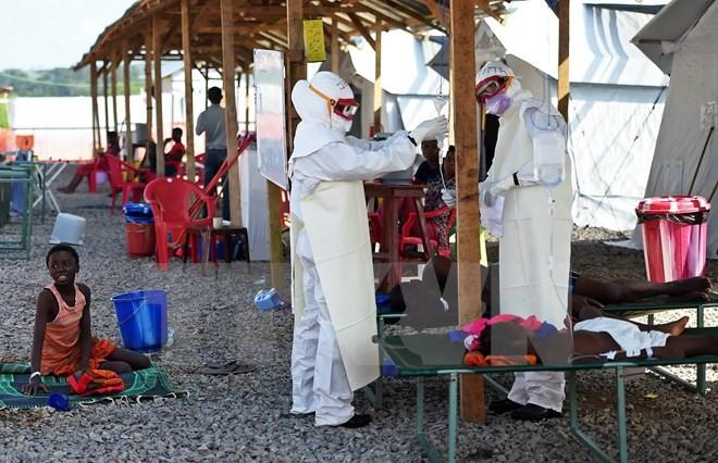 แอฟริกาแลกเปลี่ยนประสบการณ์รับมือกับการแพร่ระบาดของไวรัสอีโบลา - ảnh 1