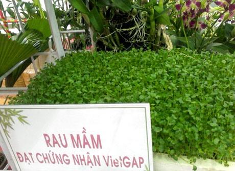 กองทุนสนับสนุนเกษตรกรนครโฮจิมินห์ช่วยเกษตรกรหลุดพ้นจากความยากจน - ảnh 1