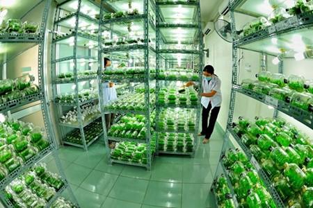 การพัฒนาการเกษตรที่ใช้เทคโนโลยีขั้นสูงในนครโฮจิมินห์ - ảnh 1