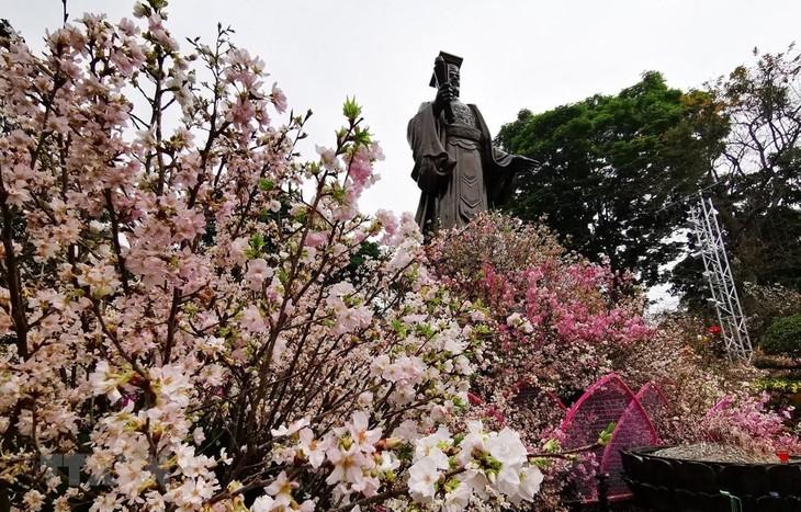 เทศกาลดอกซากุระญี่ปุ่น ฮานอย2019 - ảnh 1
