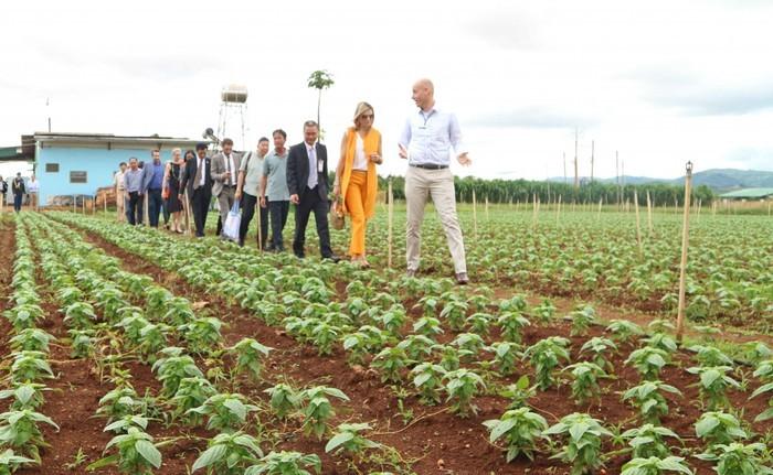 """การเจรจา """"การเกษตรอย่างยั่งยืนและความมั่นคงด้านอาหารระหว่างเวียดนามกับเนเธอร์แลนด์ - ảnh 1"""